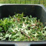 Domácí kompostování: jak kompostovat v bytě