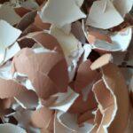 Proč nevyhazovat skořápky od vajec. Jak je využít?