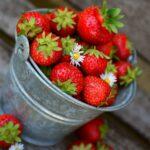 Chcete mít bohatou úrodu jahod? Na tohle nezapomeňte