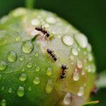 Mravenci v bytě: 7 tipů na jejich likvidaci